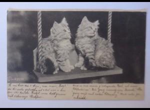 """""""Katzen, Schaukeln"""" 1900 ♥"""