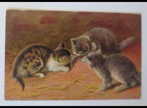 Katzen, Spielen, Reklame, Wernle´s Putzpulver, 1910 ♥ 65616
