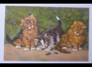 Katzen, Käfer, Biene, 1930, D. Merlin ♥