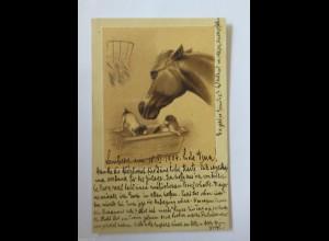"""Pferde, Hund"" 1901 ♥ (19212)"