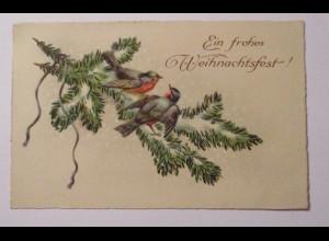 Weihnachten, Vogel, Tannenzweig, 1925 ♥ (39181)
