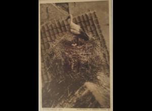"""Vogel, Storch, Storchnest"" 1910 ♥ (16767)"
