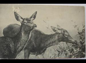 """Tiere, Reh""1916, Serie Küdka 1002 ♥ (299)"