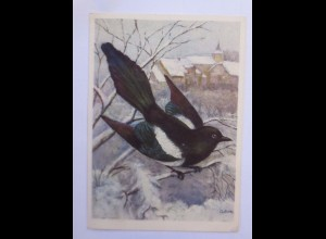 """""""Vogel, Elster, Die Baverade"""" 1958 ♥"""