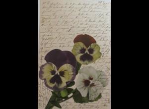 Namenstag, Stiefmütterchen, 1902 ♥ (771)