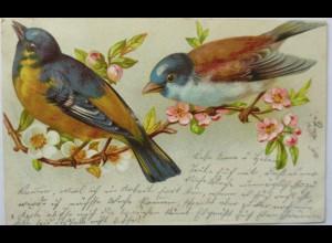 """Vogel, Kirschblüte"" 1902 ♥ (4182)"