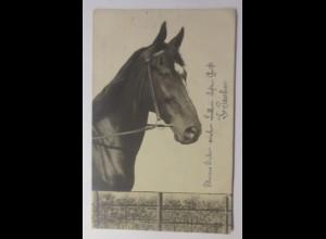 Pferde, 1900 ♥ (43598)