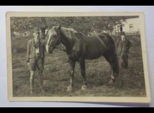 Pferde, Arbeitspferd, 1940, Fotokarte ♥ (21252)
