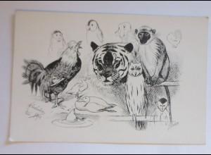 Affen, Tiger, Hahn, Eule, Enten, 1900, Adolf Oberländer ♥ (41488)