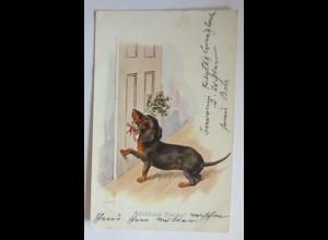 Neujahr, Dackel, Stechpalmen, 1904 ♥ (71179)