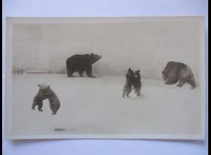 Tiere, Bären, Fotokarte ca. 1900