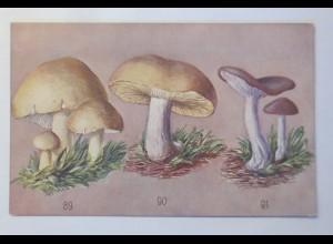 Pilze, Nackter Ritterling, Maipilz, Zweifarbiger Ritterling, 1950 ♥ (34298)