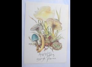 Pilze, Papagelgrüner Saftling, 1970 ♥ (12011)