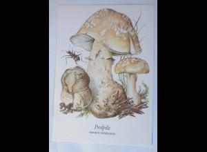 Pilze, Perlpilz, 1970 ♥ (4360)
