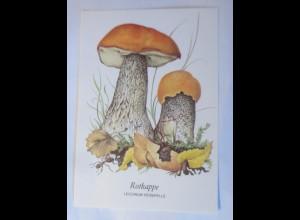 Pilze, Rotkappe, 1970 ♥ (4331)