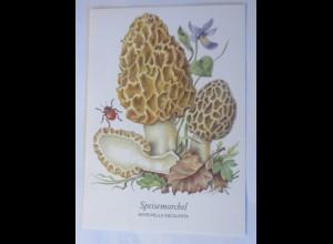 Pilze, Speisemorchel, 1970 ♥ (68269)