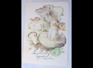 Pilze, Märzschneckling, 1950 ♥ (70739)