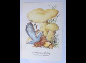 Pilze, Kornblumenröhrling, 1950 ♥ (37687)