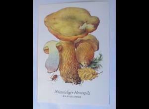 Pilze, Netzstieliger Hexenpilz, 1950 ♥ (54)
