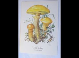 Pilze, Goldröhrling, 1950 ♥ (66216)