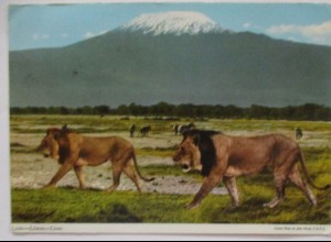 Kenya, Löwen, 1974 aus Naro Moru (22309)