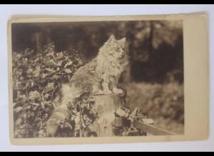 """""""Katze, Baumstamm, """" 1900 ♥ (51780)"""