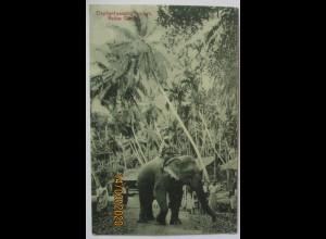 Ceylon, Elefant, 1910 von Colombo nach Hamburg (10477)