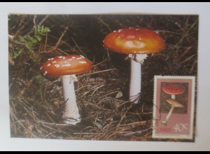 Maximumkarten Ciskei Pilze 1987 ♥ (376)