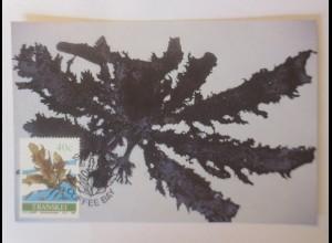 Maximumkarten Transkei Ecklonia biruncinata 1988 ♥ (17770)