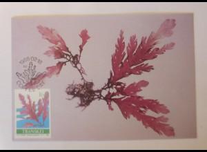 Maximumkarten Transkei Gelidium amanzii 1988 ♥ (14139)