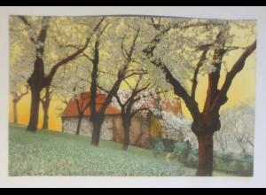 Photochromie, Frühling, Landschaft, 1907 ♥ (69277)