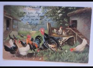Hühner Farm, Vogel, 1906, signiert ♥