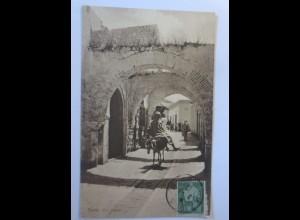 Esel, Tunis Arabische Strasse, 1912 ♥ (74604)