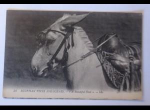 Esel, Ägyptische Typen und Szenen. Ein schöner Kopf, 1905 ♥ (74605)