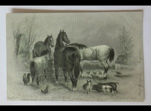 """""""Pferde, Schwein, Huhn, Enten, Bauernhof"""" 1901 ♥ (34682)"""