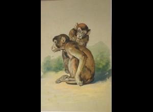 """""""Vermenschlichte, Affen, Läuse, Entlausen"""" 1900, Prägekarte ♥"""