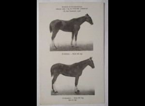 Pferde, Werbung Farine Lavocat (Pferdefutter) (43558)