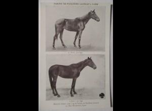 Pferde, Werbung Farine Lavocat (Pferdefutter, Kraftfutter)