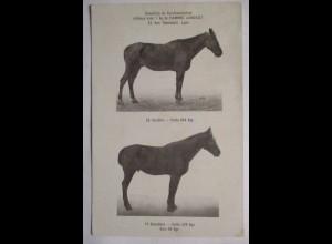 Pferde, Werbung Farine Lavocat (Pferdefutter, Kraftfutter) (36373)