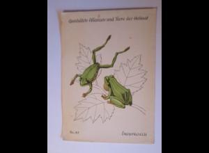 """""""Laubfrosch, Geschützte Pflanzen und Tiere der Heimat"""" 1962 ♥"""