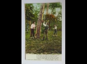 """Baumbearbeitung, Baum schälen, Entrinden"" 1903 ♥"
