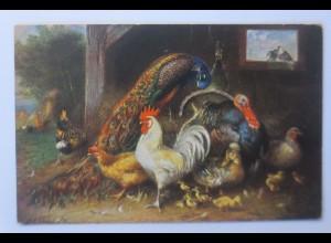 Vögel, Pfau, Hahn, Pute, Küken, 1916, signiert ♥
