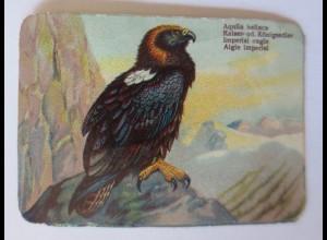 Oblaten, Vogel, 1900 8,5 cm x 6 cm ♥ (35797)