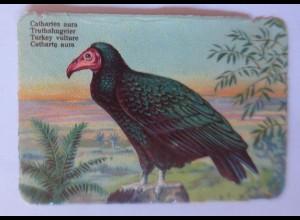 Oblaten, Vogel, 1900 8,5 cm x 6 cm ♥ (35045)