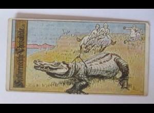 """""""Stollwerck"""" Serie 52. Nr. 1, Album Nr. 2, Centauren, Krokodil ♥"""