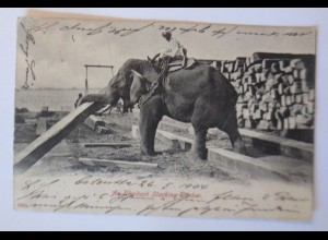Elefanten, An Elephant Stacking Timber, Indien, 1906 ♥