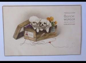 Geburtstag, Kiste, Hund, Blumen, 1915 ♥ (51254)