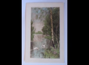 Vogel, Schwan, See, Wald, Im Park, 1907 ♥ (70175)