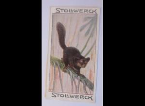 Stollwerck, Gruppe 8, Nr.6, L´ Aye-Aye, Affen, ♥