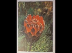 FDC Third Definitive Series - Blumen-Kaktus 21- Briefmarken Südafrika 1977 ♥